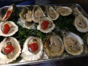 stoicoysters